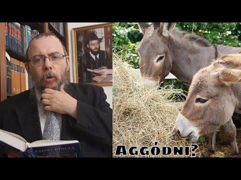 359 Miért nem aggódik a szamár? – Oberlander Báruch (Ézsaiás könyve, heti Háftárá)